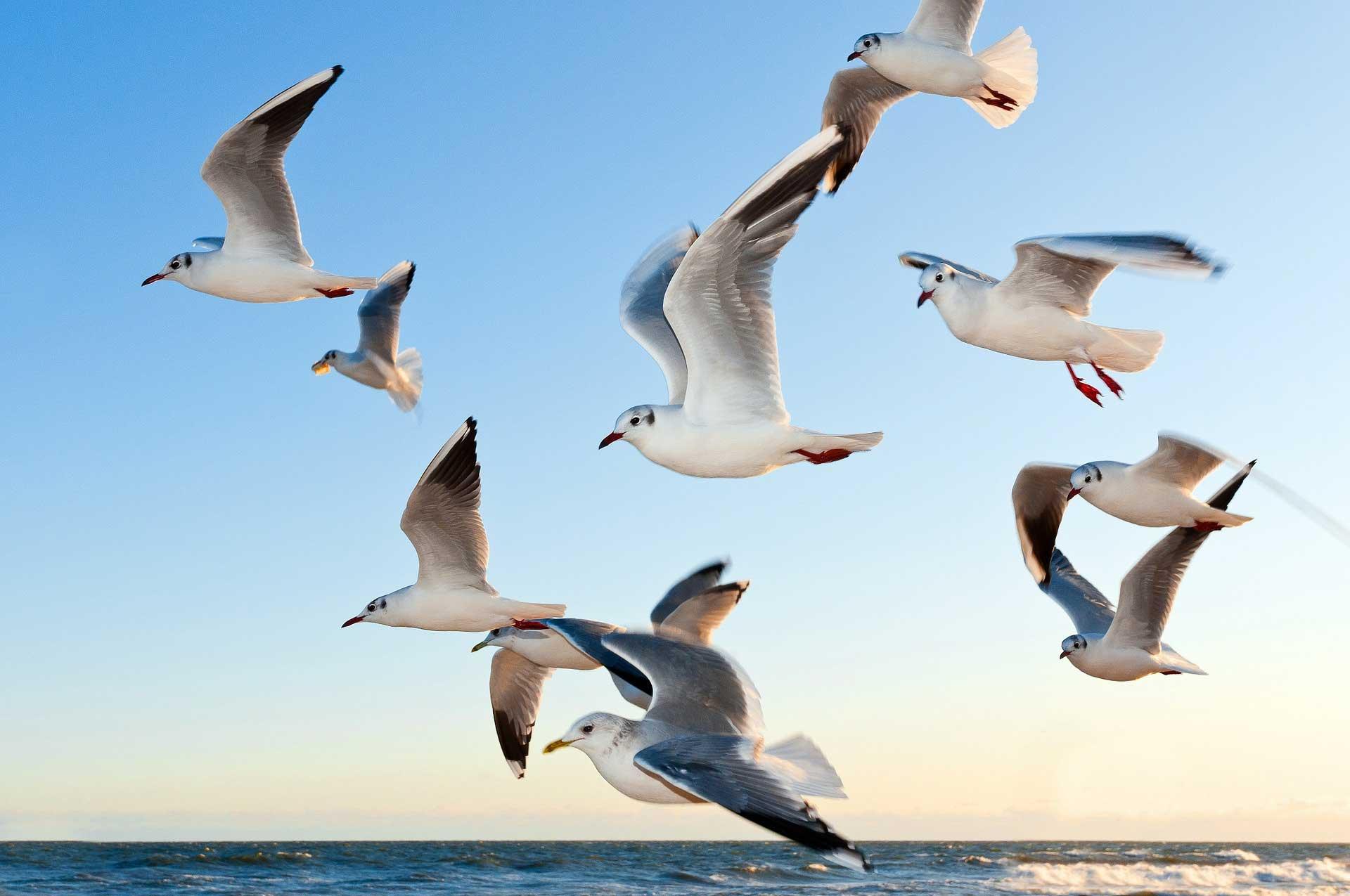gulls_1920_web